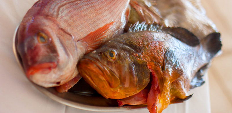 pescado_IMG_9275